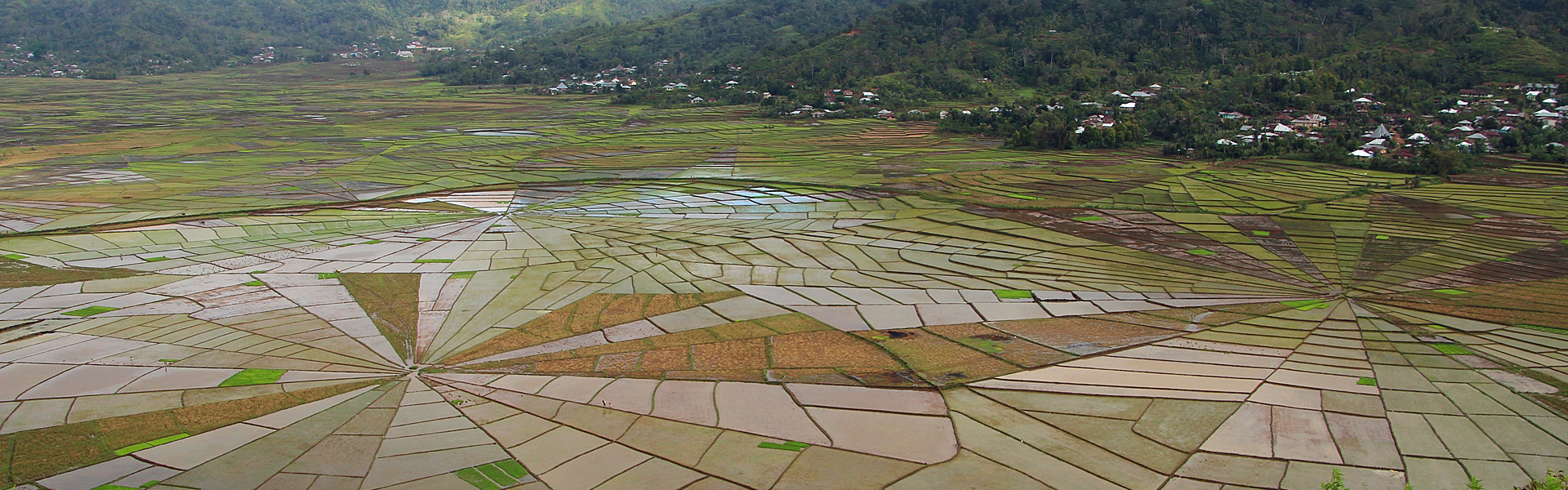 Linkgo spider rice fields near Cancar Village, Manggarai region, central Flores